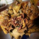 květiny listí